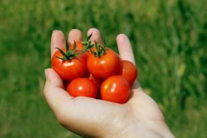 cherry-88403_1920